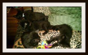 framed-kittens-on-bed